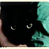 Adopt A Pet :: Estella - Trevose, PA