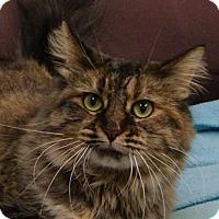 Adopt A Pet :: Aurora - Monroe, MI