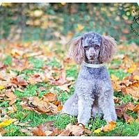 Adopt A Pet :: Bug - Seattle c/o Kingston 98346/ Washington State, WA