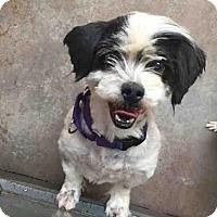 Adopt A Pet :: TUCKER - Santa Fe, NM