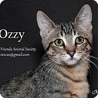 Adopt A Pet :: Ozzy - Ortonville, MI