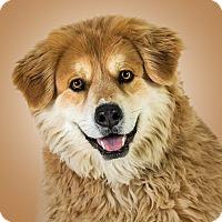 Adopt A Pet :: Cleo - Prescott, AZ