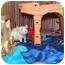 Photo 2 - Rat for adoption in Hamburg, Pennsylvania - Noel and Tinsel