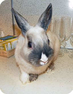 Dwarf Mix for adoption in North Gower, Ontario - Slim
