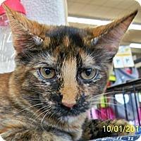 Adopt A Pet :: Sunshine W - Sacramento, CA