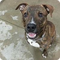 Adopt A Pet :: Blaine - Pittsbugh, PA
