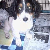 Adopt A Pet :: Jack - Hazard, KY