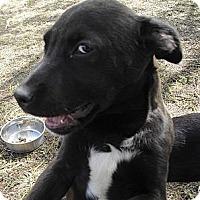 Adopt A Pet :: Boots - Vista, CA