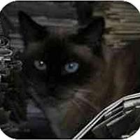 Adopt A Pet :: Meika - Davis, CA