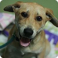 Adopt A Pet :: Annie - Canoga Park, CA