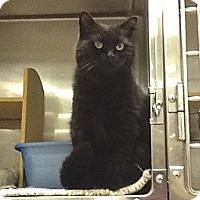 Adopt A Pet :: Connie - Colmar, PA
