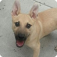 Adopt A Pet :: Paul*ADOPTED!* - Chicago, IL