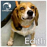 Adopt A Pet :: Edith - Novi, MI