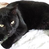 Adopt A Pet :: Blackie - brewerton, NY