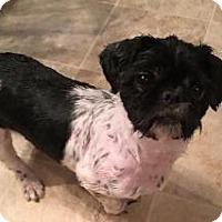 Adopt A Pet :: Dink - LEXINGTON, KY