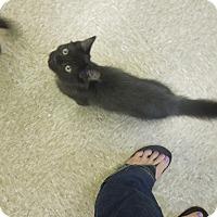 Adopt A Pet :: Tatum - Medina, OH