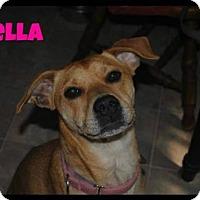 Adopt A Pet :: Bella - Limerick, ME