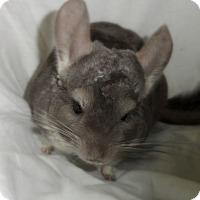 Adopt A Pet :: Stormy - Titusville, FL