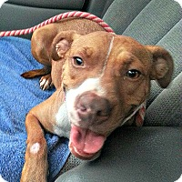 Adopt A Pet :: Ruby Rose - Indianapolis, IN