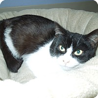 Adopt A Pet :: Blitzen - Medina, OH