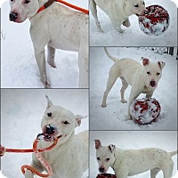 Adopt A Pet :: Bella - Muskegon, MI