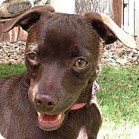Adopt A Pet :: COCOA - Hurricane, UT
