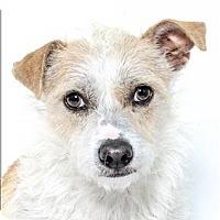 Adopt A Pet :: Max - San Luis Obispo, CA