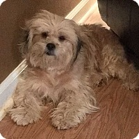 Adopt A Pet :: Tinkerbelle - E. Greenwhich, RI