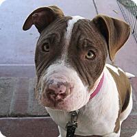 Adopt A Pet :: Mimi - San Jose, CA