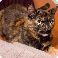 Adopt A Pet :: Mina Gorgeous Young Tortie! - Brooklyn, NY