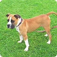 Adopt A Pet :: Xander - Cameron, MO