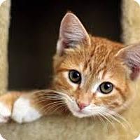 Adopt A Pet :: Nari - Minneapolis, MN