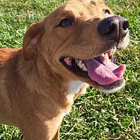Adopt A Pet :: BoBo - Russellville, KY