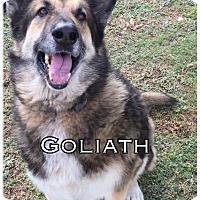 Adopt A Pet :: Goliath - Comanche, TX