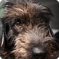 Adopt A Pet :: Kirby - Fort Atkinson, WI