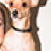 Adopt A Pet :: Kelly - Pompton Lakes, NJ