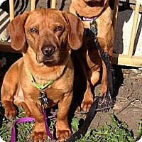 Adopt A Pet :: Keith - Plainfield, IL