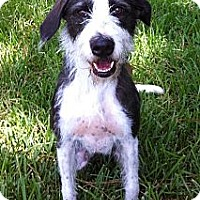 Adopt A Pet :: Betsy - Kingwood, TX