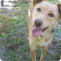 Adopt A Pet :: Roxy - Conyers, GA