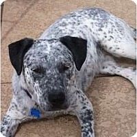 Adopt A Pet :: Utah Jane - Phoenix, AZ