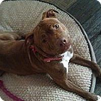 Adopt A Pet :: Daphne - Glenview, IL