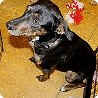 Adopt A Pet :: Sally - Silsbee, TX