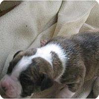 Adopt A Pet :: Ringo - Antioch, IL