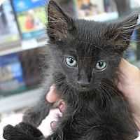 Adopt A Pet :: Einstein - Lighthouse Point, FL