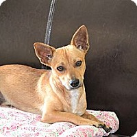 Adopt A Pet :: Quincy- I love dogs & CATS - Redondo Beach, CA