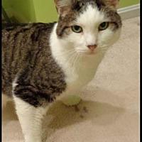 Adopt A Pet :: Chagall - Merrifield, VA