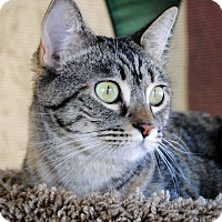 Adopt A Pet :: Caroline - Palmdale, CA