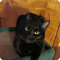 Adopt A Pet :: Olivia - Janesville, WI