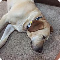 Adopt A Pet :: Stetson - Charleston, SC