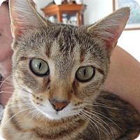 Adopt A Pet :: Babes - Harrisonburg, VA